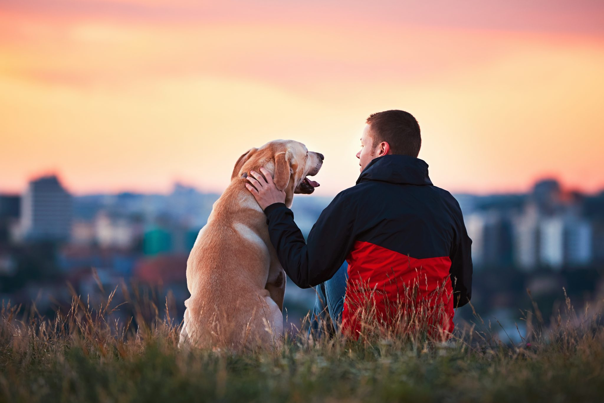 Man sitting on a hill with yellow labrador, learning to trust the process.