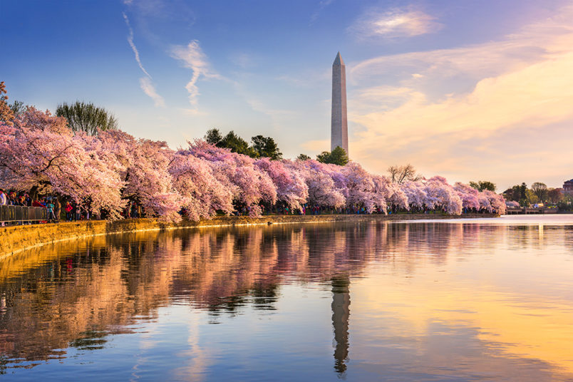 Grotto's travel guide for what to do in Washington, D.C.