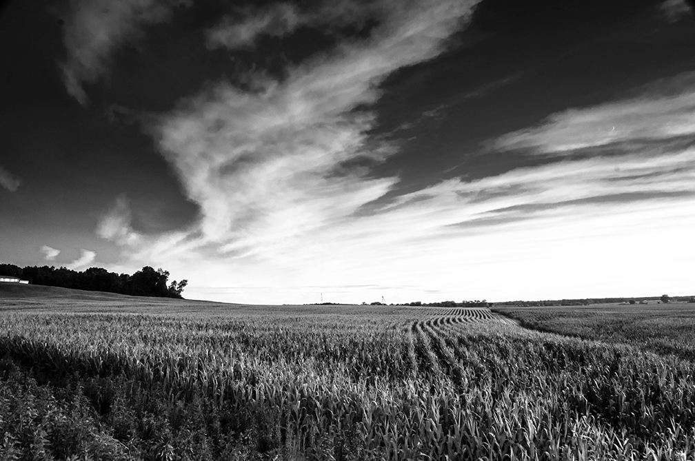 The clouds in the sky reflect the sunshine above the countryside of cornfields.